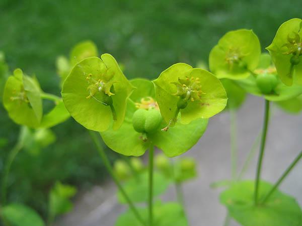 identification fleur de talus Web_IMG_0979